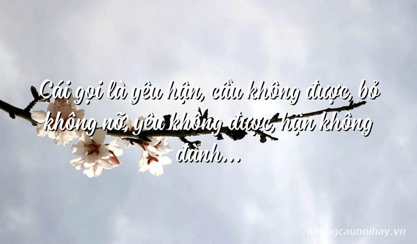 Cái gọi là yêu hận, cầu không được, bỏ không nỡ, yêu không được, hận không đành…
