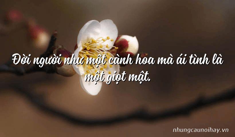 Đời người như một cành hoa mà ái tình là một giọt mật.