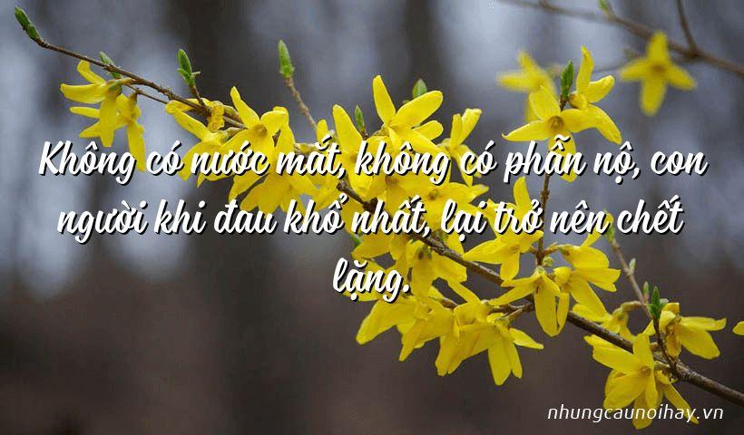 Không có nước mắt, không có phẫn nộ, con người khi đau khổ nhất, lại trở nên chết lặng.