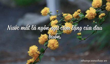 Nước mắt là ngôn ngữ câm lặng của đau buồn.