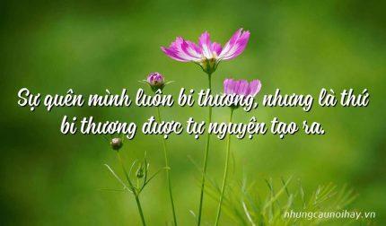 Sự quên mình luôn bi thương, nhưng là thứ bi thương được tự nguyện tạo ra.