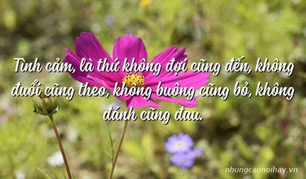 Tình cảm, là thứ không đợi cũng đến, không đuổi cũng theo, không buông cũng bỏ, không đánh cũng đau.