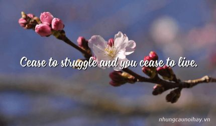 Cease to struggle and you cease to live.