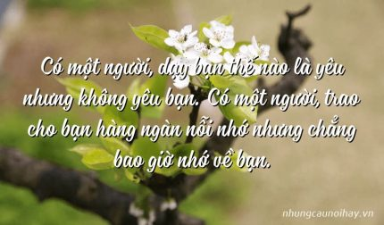 Có một người, dạy bạn thế nào là yêu nhưng không yêu bạn. Có một người, trao cho bạn hàng ngàn nỗi nhớ nhưng chẳng bao giờ nhớ về bạn.