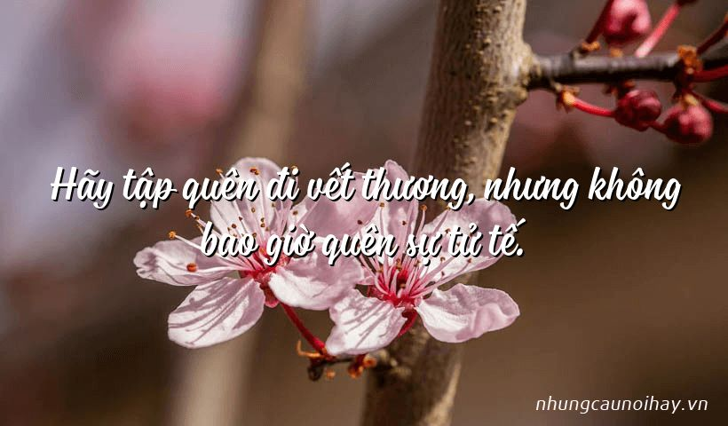 Hãy tập quên đi vết thương, nhưng không bao giờ quên sự tử tế.