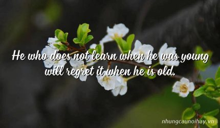 He who does not learn when he was young will regret it when he is old.