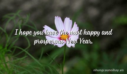 I hope you have the most happy and prosperous New Year.