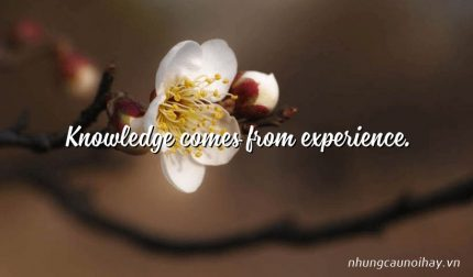 Knowledge comes from experience.
