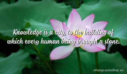 Knowledge is a city, to the building of which every human being brought a stone.
