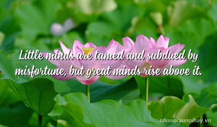 Little minds are tamed and subdued by misfortune, but great minds rise above it.