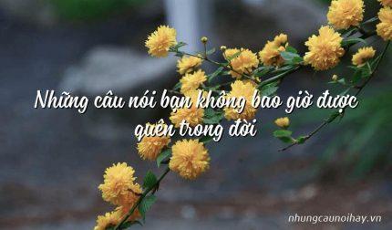 Những câu nói bạn không bao giờ được quên trong đời