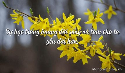 Sự học trang hoàng đời sống và làm cho ta yêu đời hơn.