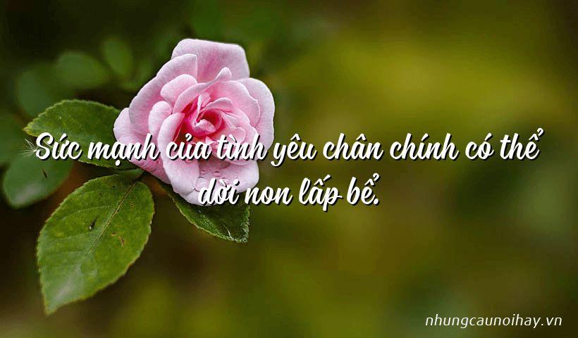 suc manh cua tinh yeu chan chinh co the doi non lap be - Tổng hợp những câu nói hay về tình yêu hạnh phúc nổi tiếng nhất