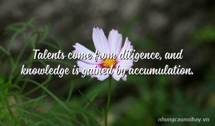 Talents come from diligence, and knowledge is gained by accumulation.