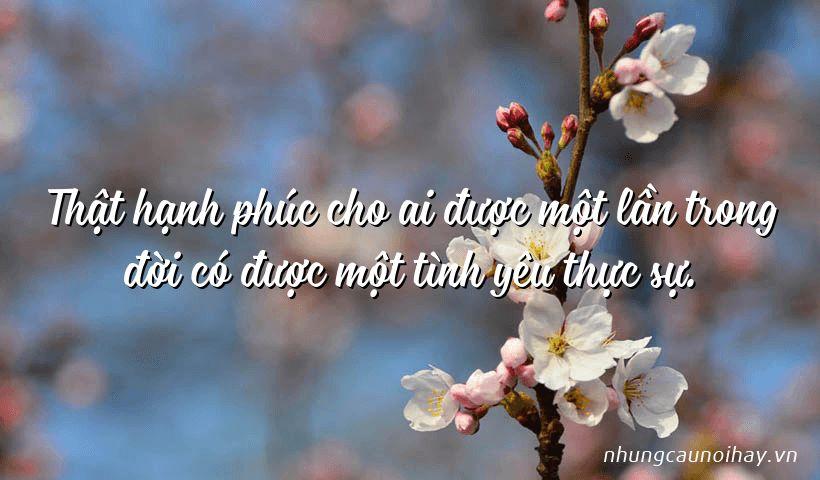 that hanh phuc cho ai duoc mot lan trong doi co duoc mot tinh yeu thuc su - Tổng hợp những câu nói hay về tình yêu hạnh phúc nổi tiếng nhất