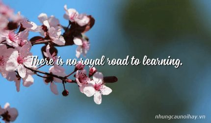 There is no royal road to learning.
