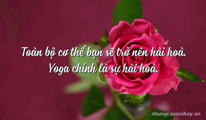 Toàn bộ cơ thể bạn sẽ trở nên hài hoà. Yoga chính là sự hài hoà.