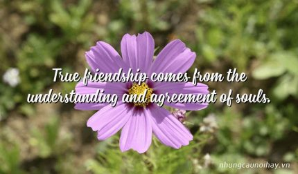True friendship comes from the understanding and agreement of souls.