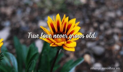 True love never grows old.