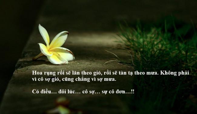 Hoa rụng rồi sẽ lăn theo gió