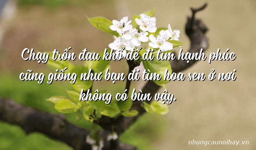 Chạy trốn đau khổ để đi tìm hạnh phúc cũng giống như bạn đi tìm hoa sen ở nơi không có bùn vậy.