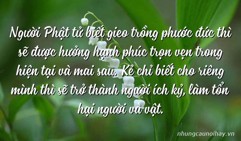 Người Phật tử biết gieo trồng phước đức thì sẽ được hưởng hạnh phúc trọn vẹn trong hiện tại và mai sau. Kẻ chỉ biết cho riêng mình thì sẽ trở thành người ích kỷ, làm tổn hại người và vật.