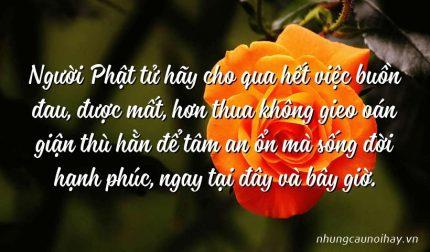 Người Phật tử hãy cho qua hết việc buồn đau, được mất, hơn thua không gieo oán giận thù hằn để tâm an ổn mà sống đời hạnh phúc, ngay tại đây và bây giờ.
